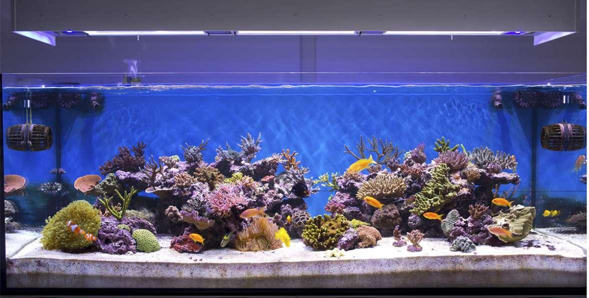 אקווריום של דגים וחסרי חוליות של מים מלוחים צילום Shutterstock