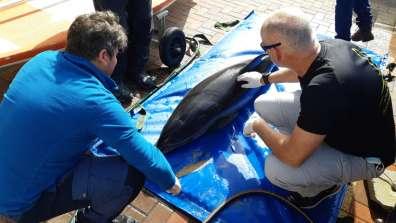 דולפין מת - דוד חלפון