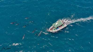 להקת דולפינים מלווה את היחידה הימית