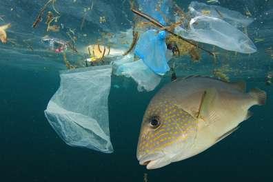 זיהום פלסטיק בים מסכן את עולם החי- צילום- Shutterstock