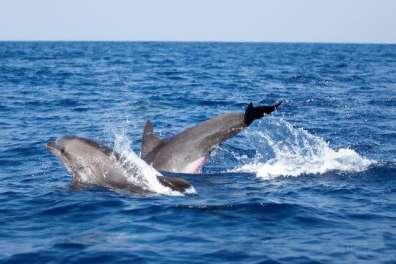לאורך רצועת החוף משוטטים בקביעות כ־ 50 דולפינים- צילום אורי פרו