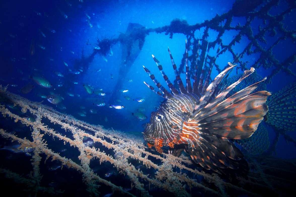 רשת רפאים במפרץ אילת עלולה להמשיך ללכוד דגים ויצורים נוספים- צילום עמרי יוסף עומסי