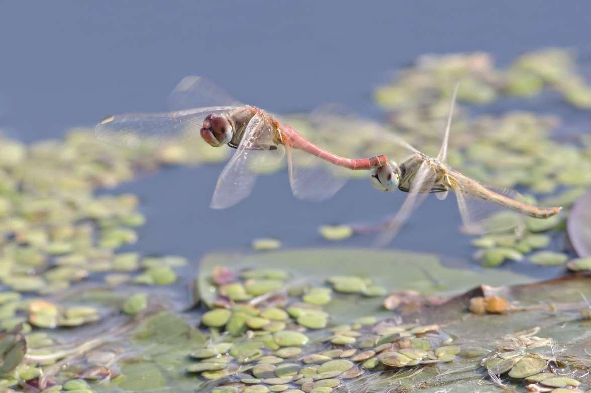 שפיריות - צילום עדי אשכנזי