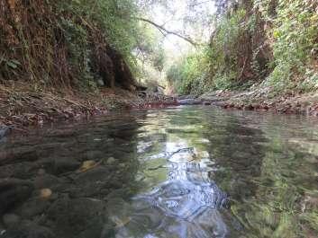 שפך נחל דליות- צילום שירן אונגר