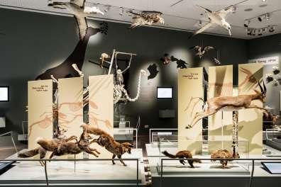 תערוכה במוזיאון הטבע- צילום איתי בנית