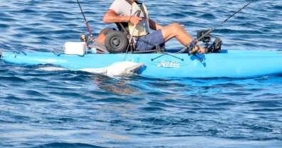 הדיג והברקודה
