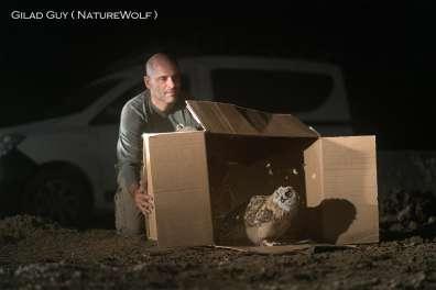 שחרור אוח עיטי צעיר - צילם גלעד גיא Naturewolf