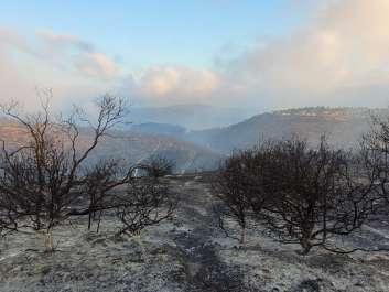 שמורת הר טייסים אחרי השריפה. צילום אריאל קדם רשות הטבע והגנים
