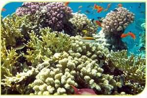שמורת האלמוגים באילת - צילם אסף זבולוני