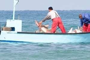 אומרים לא לדיג לא חוקי
