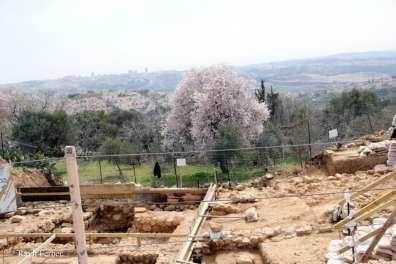 שקד פורח על רקע ירושלים והחפירות באתר נבי סמואל