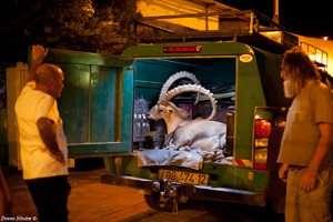 מבצע להצלת יעל שנפגעה בתאונת דרכים - צילום דורון ניסים