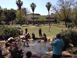 בריכות שכשוך בגן לאומי ירקון פארק אפק צילמה שרית פלאצ'י מיארה