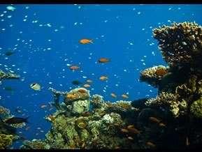 חוף אלמוגים