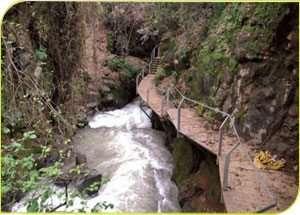 גשר תלוי בשמורת טבע נחל חרמון - בניאס, רשות הטבע והגנים מרכז חינוך והסברה גולן
