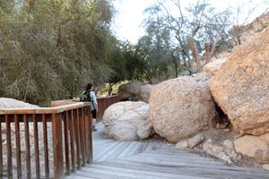 שביל נגיש בשמורת טבע נחל דוד - צילם יעקב שקולניק