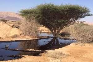 דליפת נפט גולמי בשמורת טבע עברונה