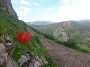 צבעוני ההרים במסלול המעגלי בארבל - צילם שירן אונגר