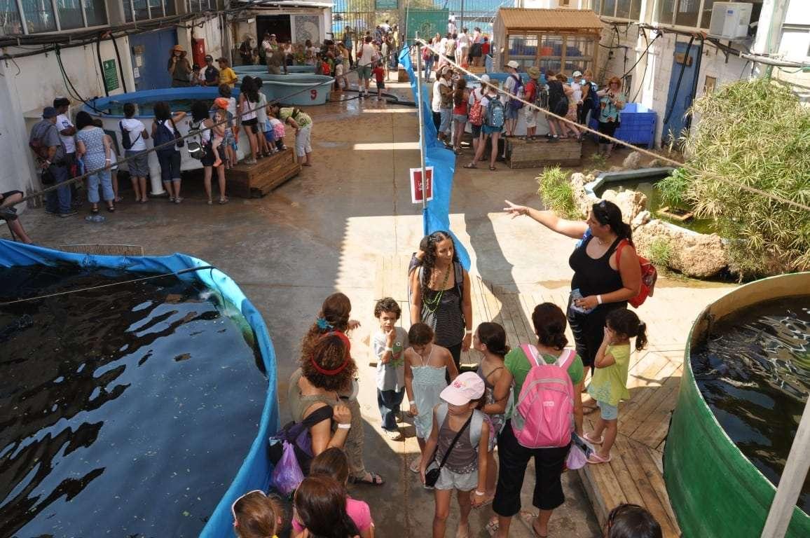 סיור במרכז הארצי להצלת צבי ים