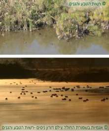 להקת אגמיות בבריכה צילם דורון ניסים-רשות הטבע והגנים