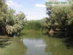 בריכת מים בעיינות צוקים