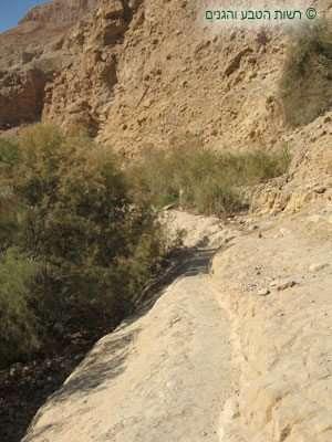 מראה כללי של שביל בנחל ערוגות