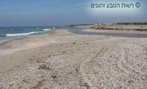 שפך נחל אלכסנדר, ברקע רכס הכורכר גן לאומי נחל אלכסנדר חוף בית ינאי