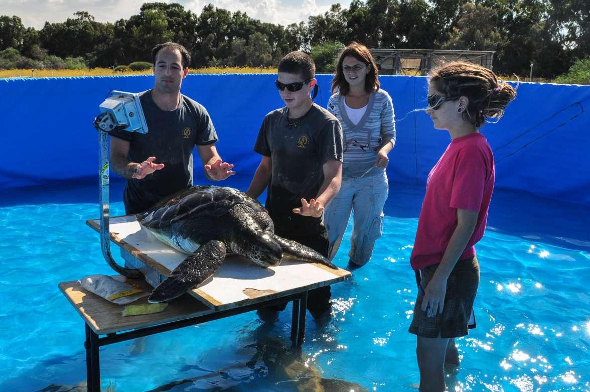 מתנדבים במרכז הארצי להצלת צבי ים - צילם יניב לוי