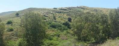 שטח ללא אקליפטוס ובו צמחייה טבעית.jpg