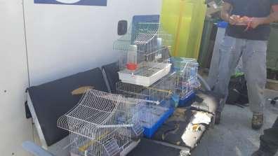 בין כלובי הציפורים שנמצאו בבתי החשודים