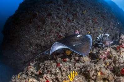 שמורת טבע ימיות
