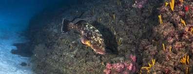 שמורות טבע ימיות