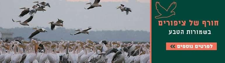 חורף-של-ציפורים-שקנאים.jpg
