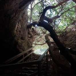 מדרגות במערת התאומים