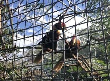 הברחת עופות במרכז הארץ. קרדיט למשטרה (2)1.jpg