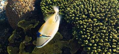 דגים ואלמוגים בים סוף