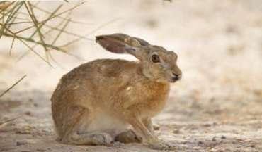 ארנבת.jpg