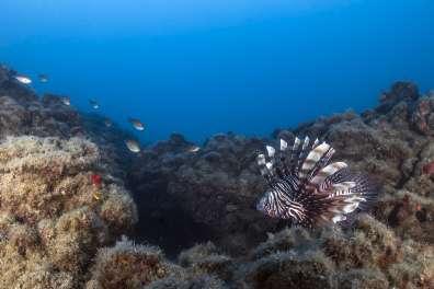 זהרון הדור בים התיכון