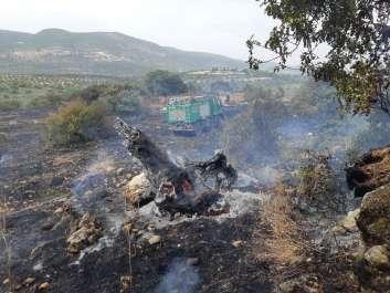כיבוי שריפה בנחל צלמון - גיא כהן