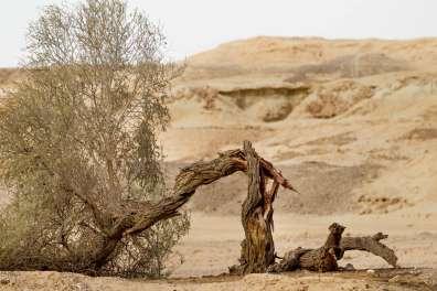 עץ שבור - דורון ניסים