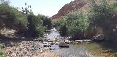 עין עוג'א צילם שחר כפיר - פקח רשות הטבע והגנים