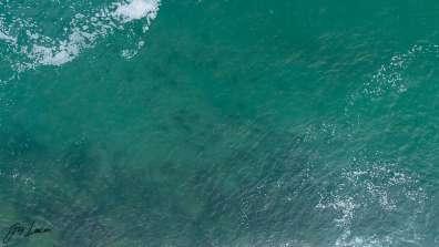 גיא לויאן - כרישים באשדוד