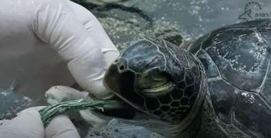 חילוץ חוט פלסטיק מצב ים